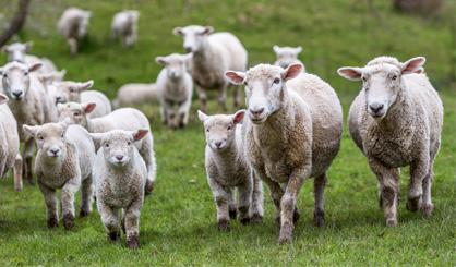 Schmallenberg virus 'may reappear', experts warn