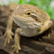 RSPCA figures show sharp rise in abandoned reptiles