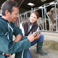 New cattle health scheme launches