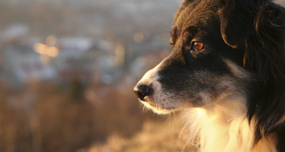 Study shows dogs have episodic-like memories