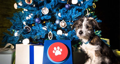 Donations-powered Christmas tree to help hundreds of pets