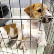 European vets speak out against dog trade