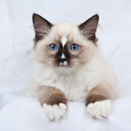 New heart disease drug offers hope for cats and humans