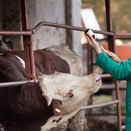 Cattle vets urged to cut antibiotic use