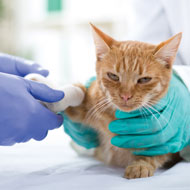 Veterinary nurses to receive advanced critical care training