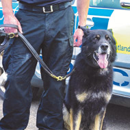 'Exemplary' police dog awarded animals' George Cross