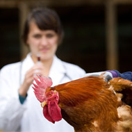 Avian flu confirmed at Suffolk farm