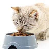 Pets at Home recalls cat food due to low thiamine levels