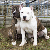 BSL to be considered for reform
