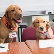 Labradors 'interview' veterinary nursing applicants