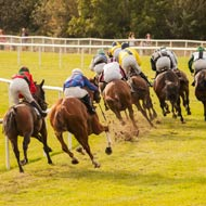 Equine racing fatalities 'at record low'