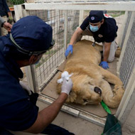 Vets prevented from saving Mosul zoo animals