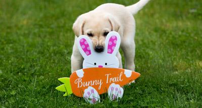 Guide Dog pups enjoy Easter treat hunt