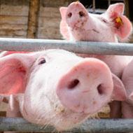 FVE calls for tougher slaughterhouse controls