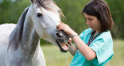 Leading vets to debate horse welfare
