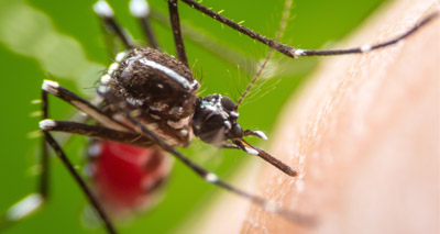 Study a potential 'game-changer' for mosquito control