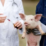 RUMA adopts 'critical' antibiotics list