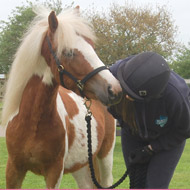 Pony Club helps find new homes for rescued ponies
