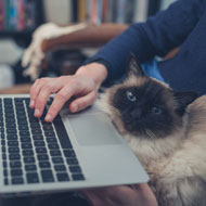 Cats reduce exam-related stress, survey finds