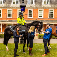 Police horses line up for equine health survey