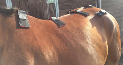 Sensors enhance relationship between lameness and back problems