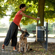 Council takes action on dog waste