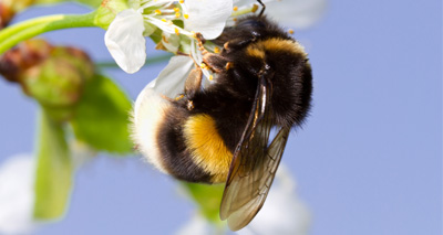 Study shows neonicotinoids can harm bees