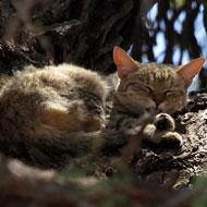 Cat DNA study sheds light on domestication