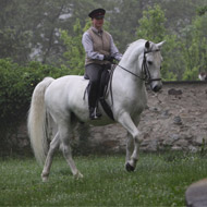 Most modern horse breeds descend from Oriental stallions