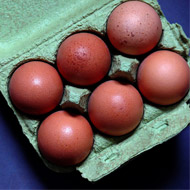 700,000 contaminated eggs distributed to Britain