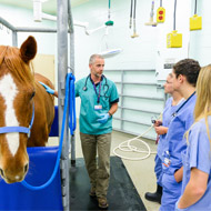 Equine researchers update vets on Coronavirus
