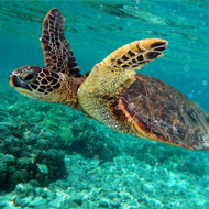 Turtle study provides insights into tumour diseases