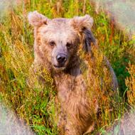 Last dancing bear rescued from Ukraine