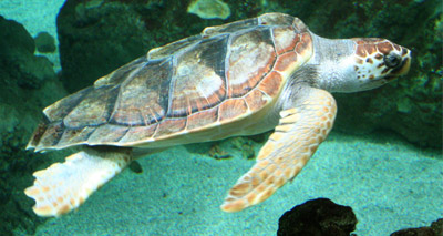 Holidaymakers stranded due to 'turtle curfew'