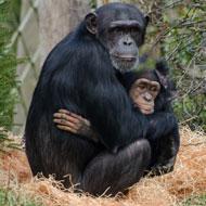 Trial set to improve zoo animal welfare