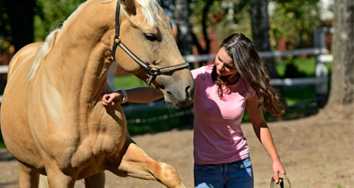 Most equine owners face end-of-life decision