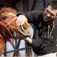 Equine vets vote against corporatisation