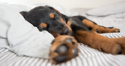 Dogs may aid a restful night's sleep - study