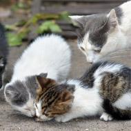 Feline charity launches cat census