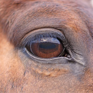 Vets react to extreme breeding in horses