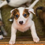 'Shocking' number of online pet adverts across EU