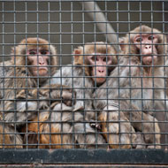 Petition calling for pet primate ban handed to Defra