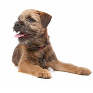 New canine DNA tests released