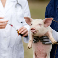 Report notes fall in European antibiotic sales for animals