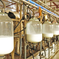 Project to increase resilience of dairy industry