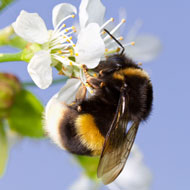 Study reveals how bees find their way back home