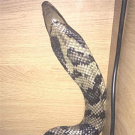 Snake owners urged to keep enclosures secure