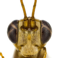 Wasp named after Harry Potter character