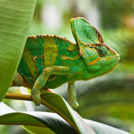 Experts in disagreement over exotic pets