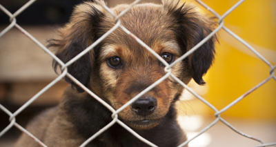 Record number of puppies seized